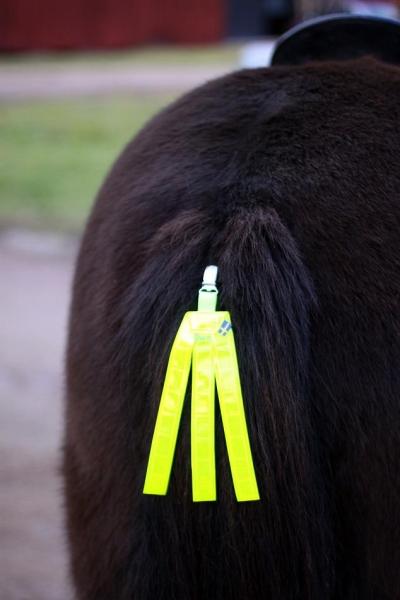 reflex till häst