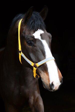 Reflexgrimma, gul, ponny