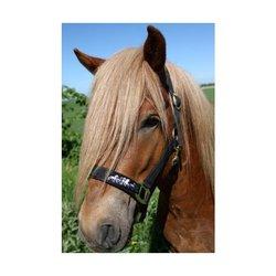 Karlslund, grimma med töltande hästar
