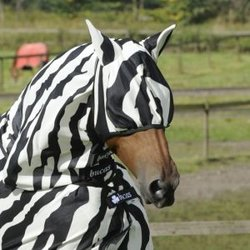 Flughuva Zebra, Bucas