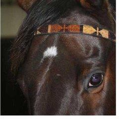 Hästpannband - Masaj UTFÖRSÄLJNING