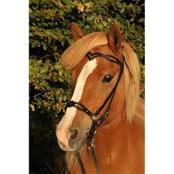 Nordic Horse Huvudlag
