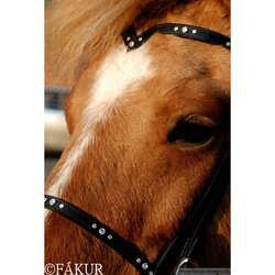 Nordic Horse, Huvudlag med V-format pannband, Julia