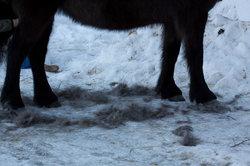 Furminator till häst